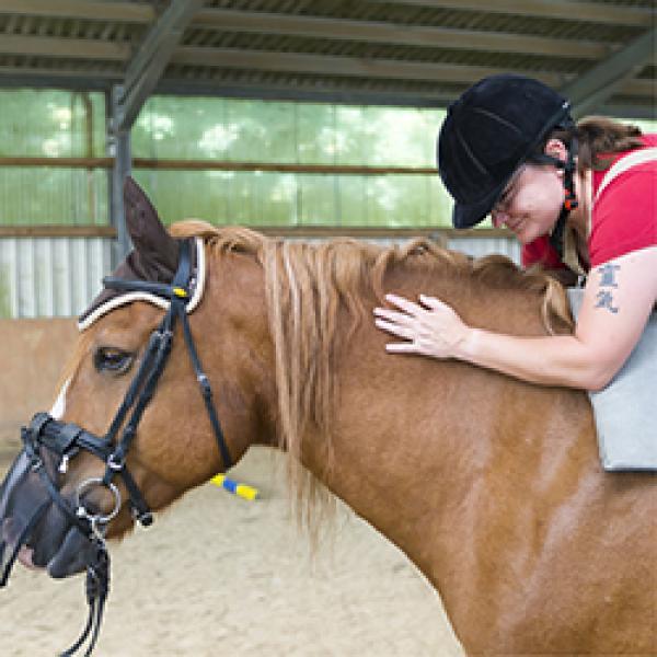 Pferd mit Reiter und Begleitung