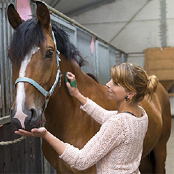 Verpflegung des Pferdes