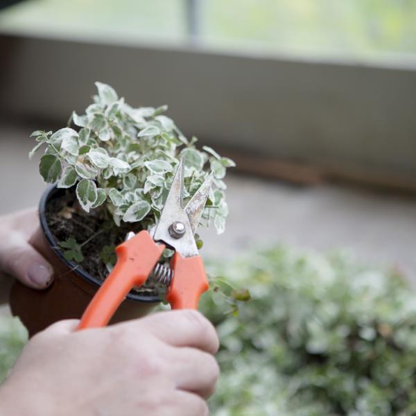 pflanzenschnitt